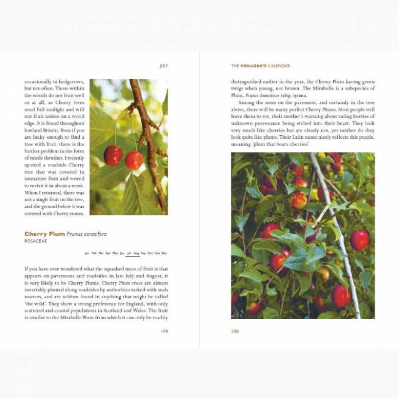 The Forager's Calendar - Paperback Book