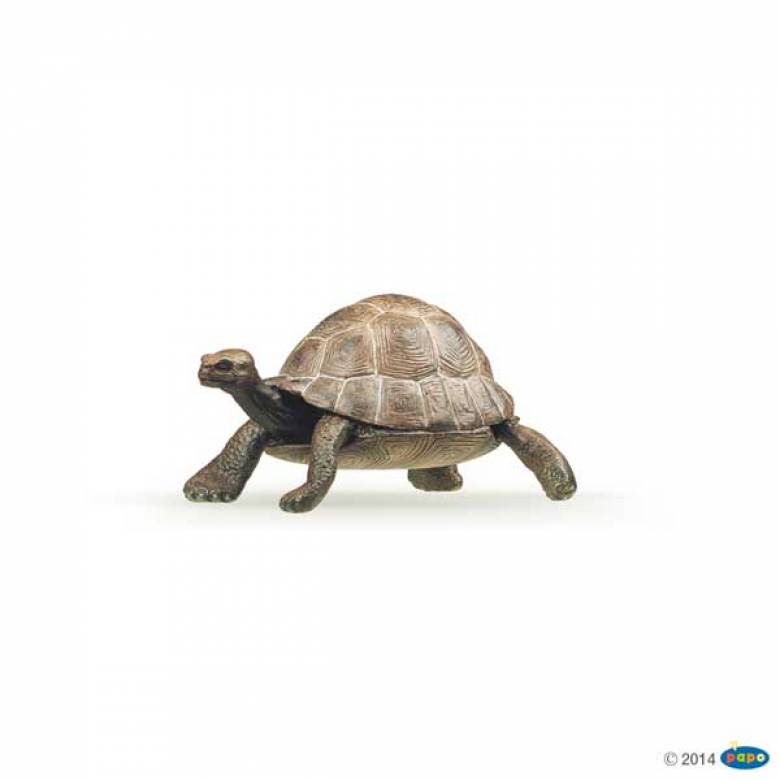 Tortoise PAPO WILD ANIMAL
