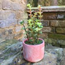 Miniature Potted Faux Succulent