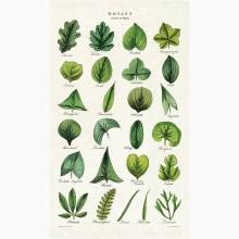 Botany Leaves Cotton Tea Towel With Gift Bag
