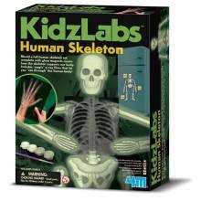 Glow Human Skeleton - Science Kit 8+