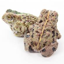 Natterjack Toad - Milk Chocolate By The Edible Museum
