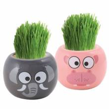 Grasshead GYO Grow Your Own African Animal Grasshead.